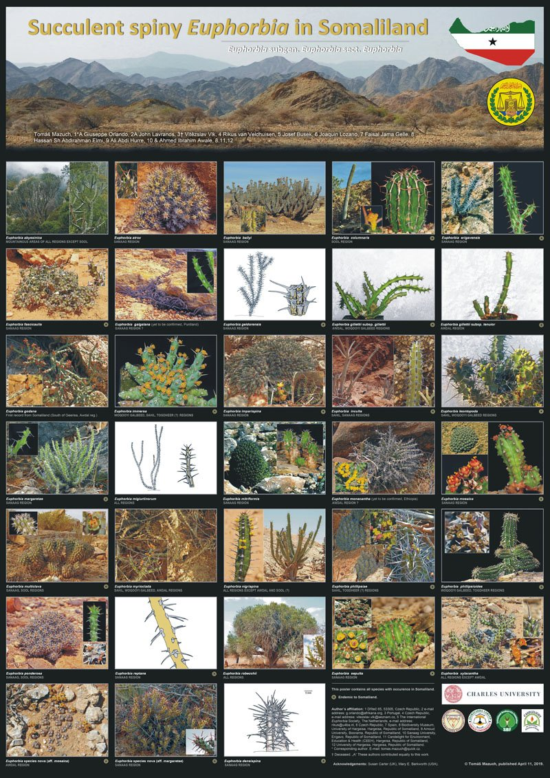 POSTER - Succulent spiny Euphorbia in Somaliland_ikona.jpg